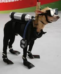 scoobydog's Avatar